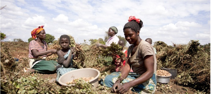 Food Ethics African Harvest