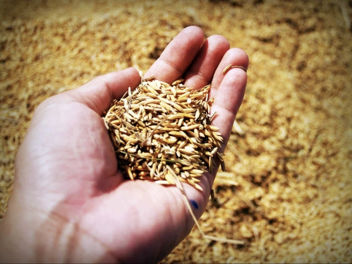 Agricultural Biodiversity - Handful of Grain