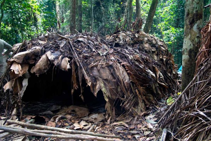 Prehistoric Africa - Huts in Baka Village Cameroon