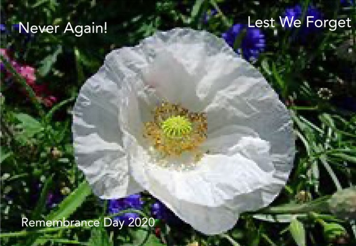 Remembrance Day Lets We Forget. Never Again! White Poppy