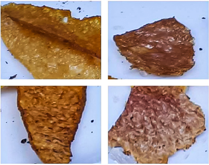 Cultured Meat - Samples Fried and Baked