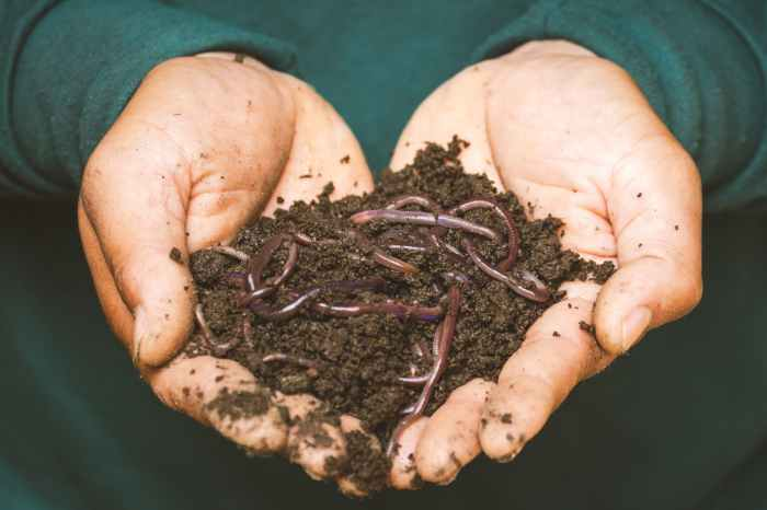 Soil Biodiversity - Two hands holding soil containing earthworms
